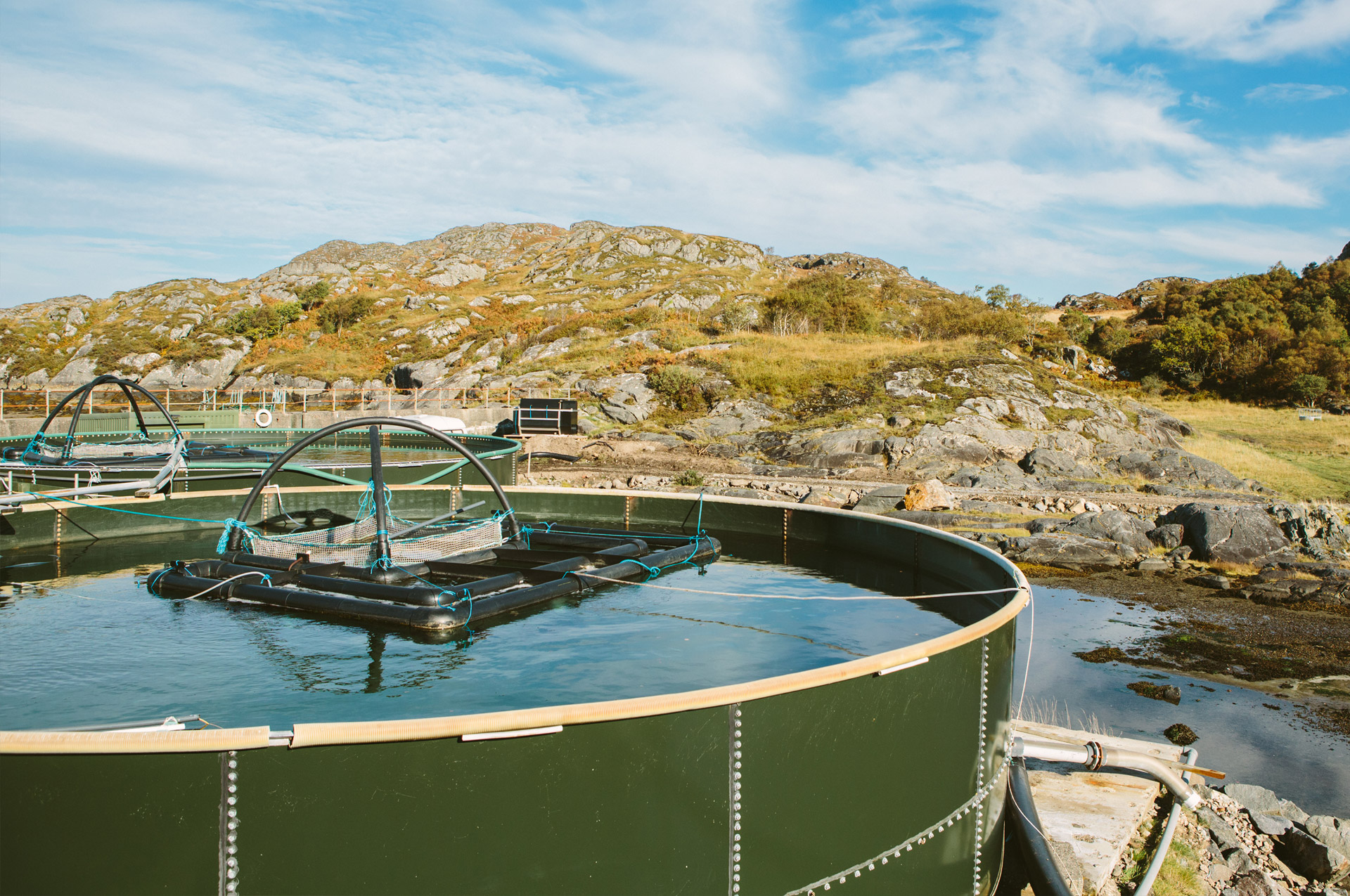Ensuring Good Health & Biosecurity on Fish Farms
