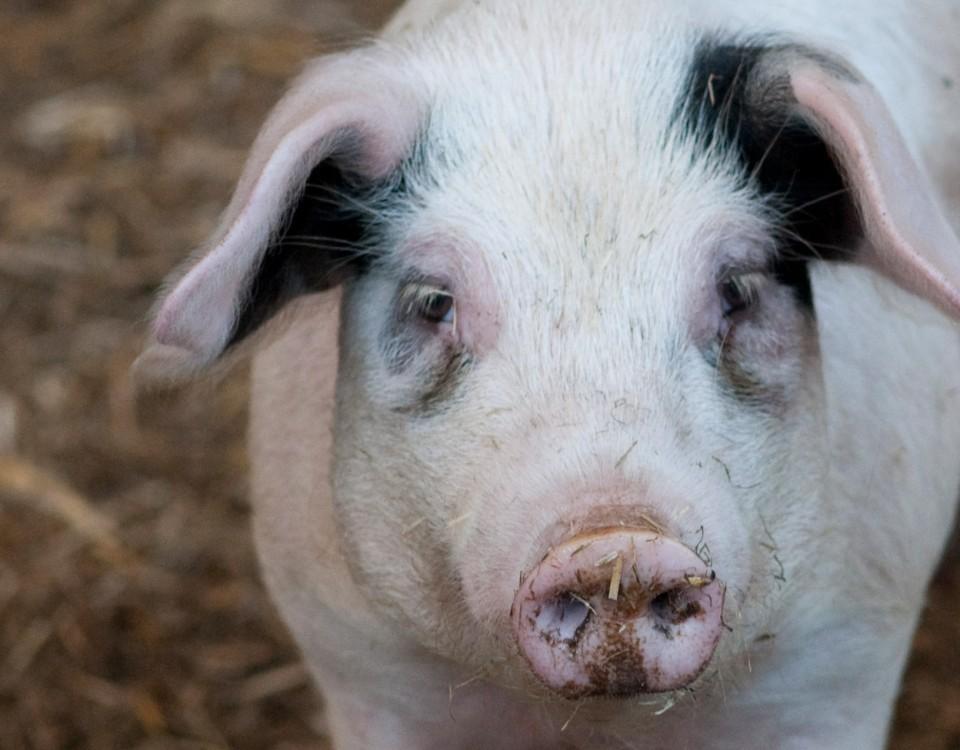 FAI Investigates forage feeding with alternative sources of protein