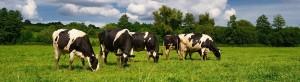 UK Dairy