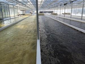 Algae: The Future of Food and Feed?