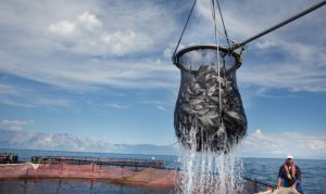 Disruptive Technology for Seafood Harvesting
