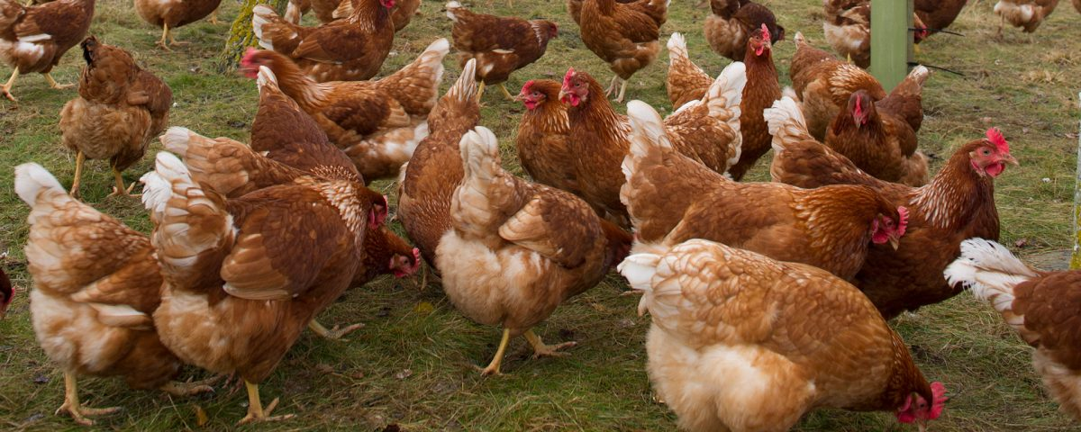 Promoting Positive Animal Welfare
