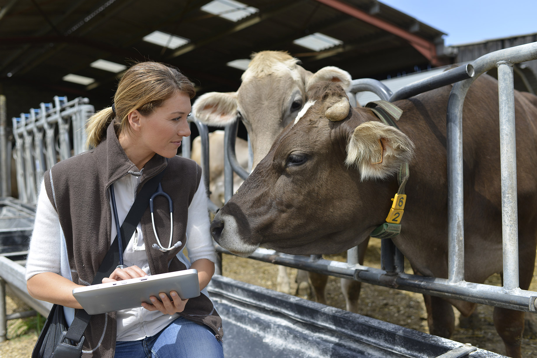 How can farm vets contribute to sustainability?