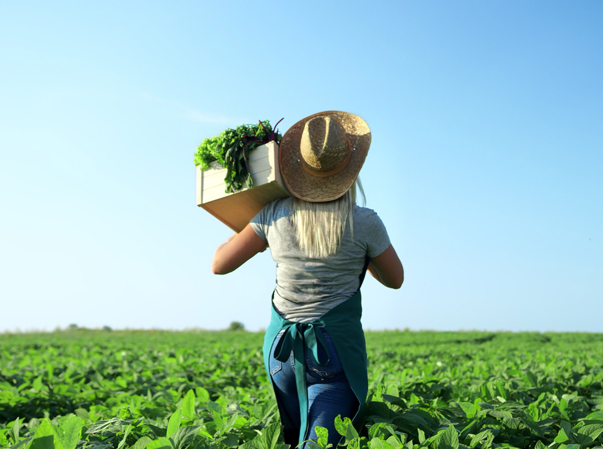 What does 'food security' actually mean?