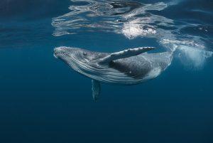 Regenerative oceans