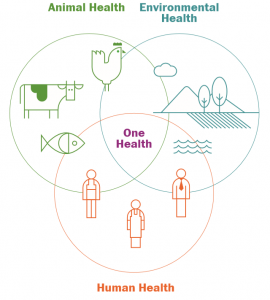 One Health - Antimicrobial Stewardship in the Food Chain