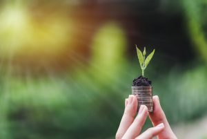 person holding coin with soil and young plant on the top