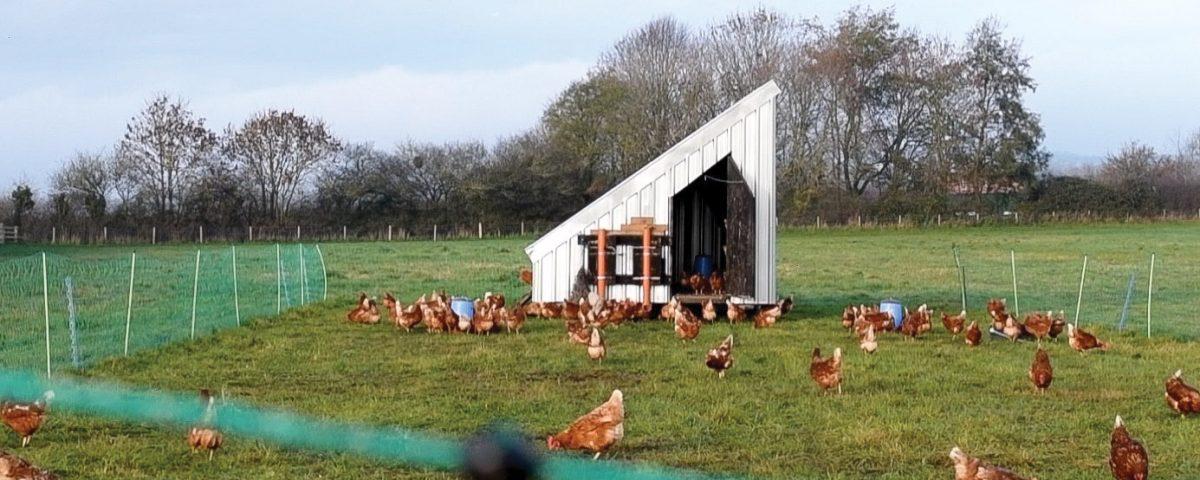 FAI Farms