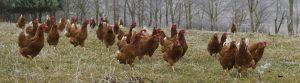 Birdbox - FAI Farms