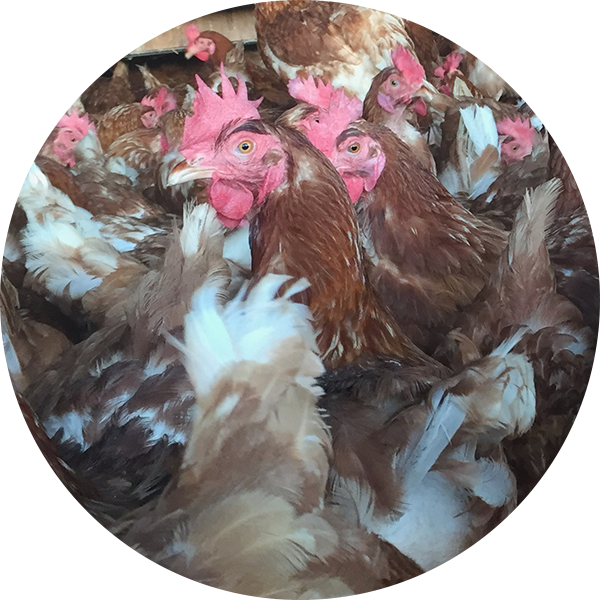 3rd China Egg Quality and Hen Welfare Summit